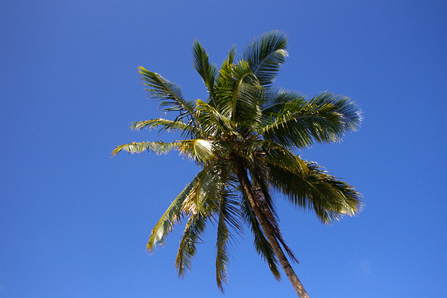 Image of the tropics