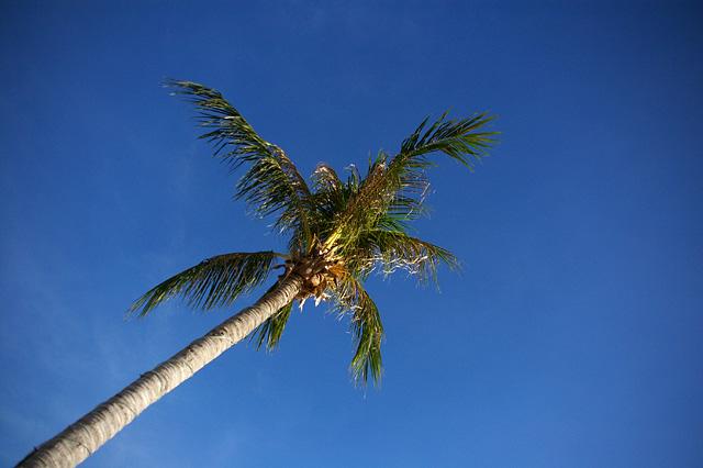 椰子の木と青い空