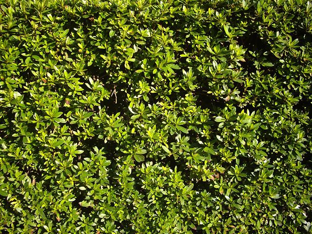 緑色の葉っぱ(全面)