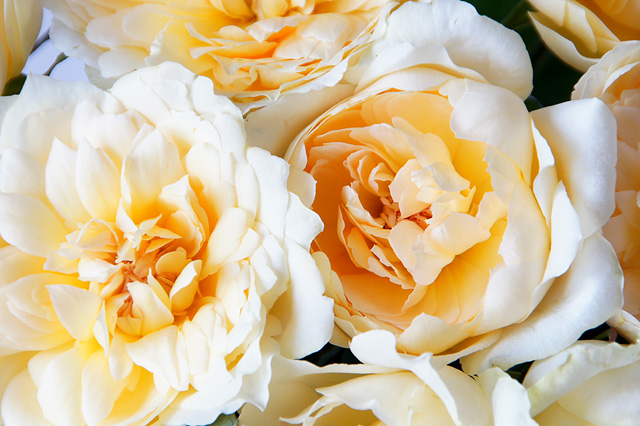マリアテレジアの花束