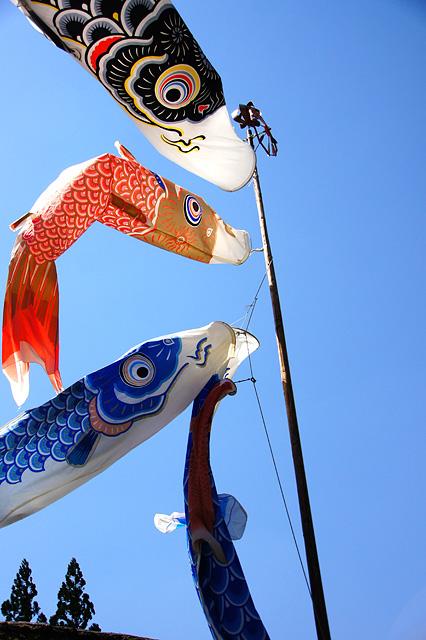 風になびく鯉のぼり