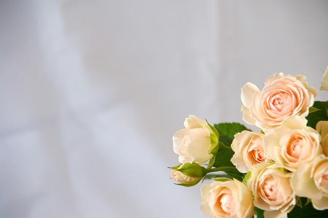 ピンク色のバラの花束