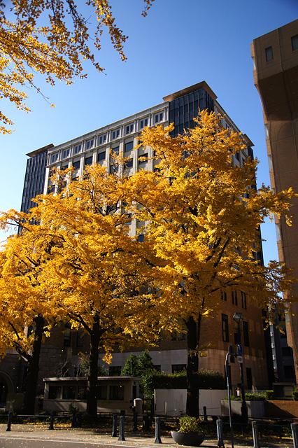 秋色の横浜日本大通り