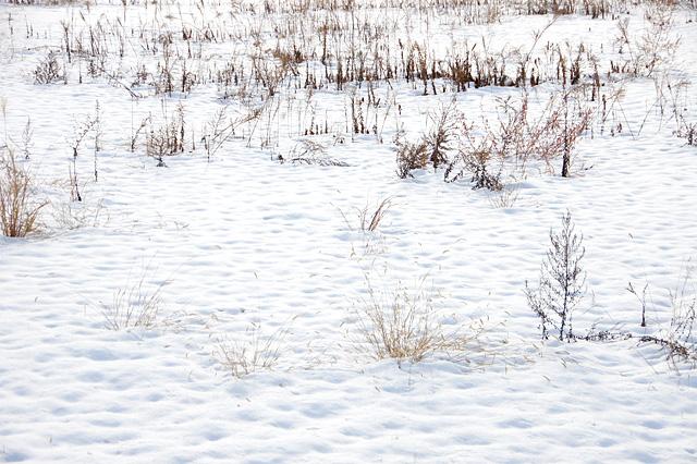空き地に積もった雪