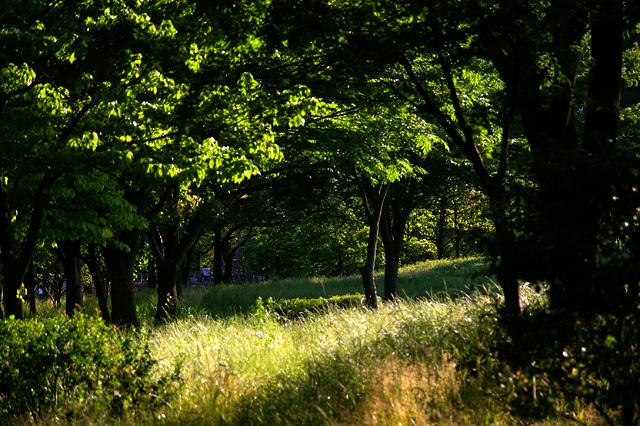 緑の公園の写真素材 フリー