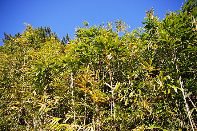 藪と青空の無料写真素材