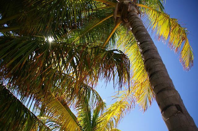 椰子の木と太陽