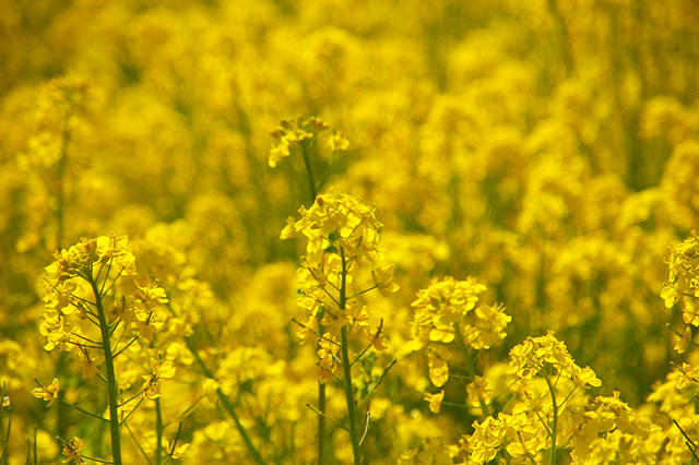 春の花の写真素材 フリー