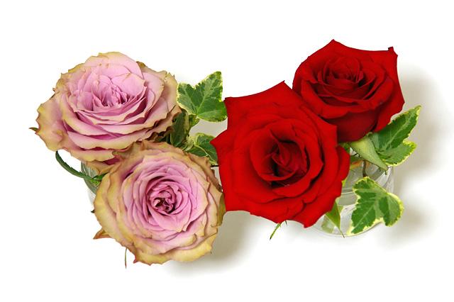 薔薇の花の写真素材 フリー