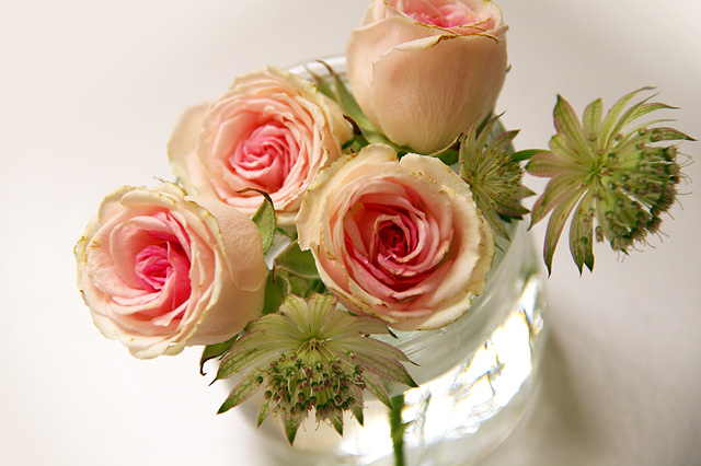 ピンクのバラの写真素材 フリー