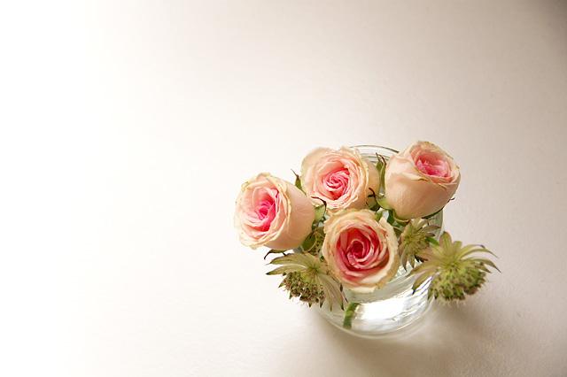 薔薇の無料写真素材