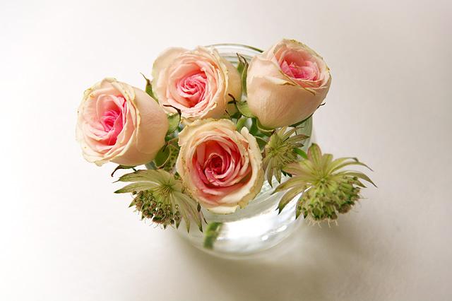 薔薇の写真素材 フリー