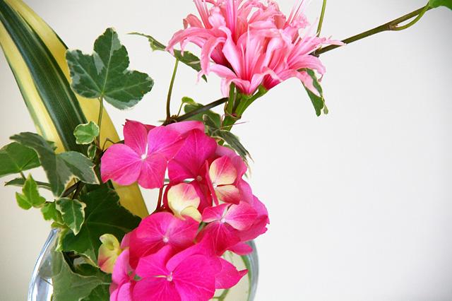 ピンクの花々とアイビーの無料写真素材