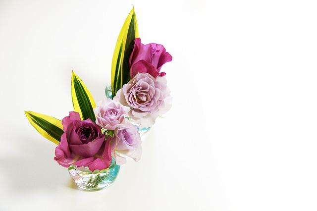 紫の小さな薔薇の写真素材 フリー