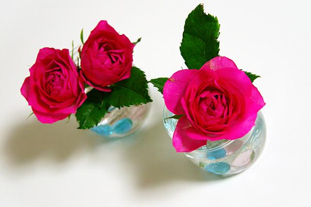3つの小さなバラ
