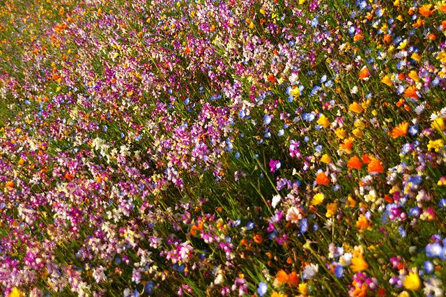 たくさんの花々