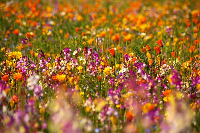 春の訪れの写真素材 フリー