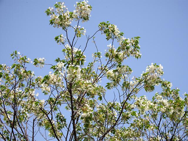 白い植物の写真素材 フリー