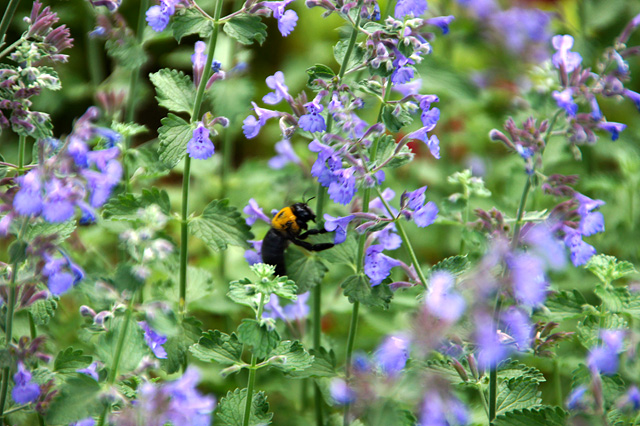 お花畑を飛ぶ蜂の写真素材 フリー