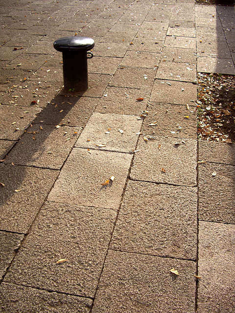 西日と歩道と落ち葉