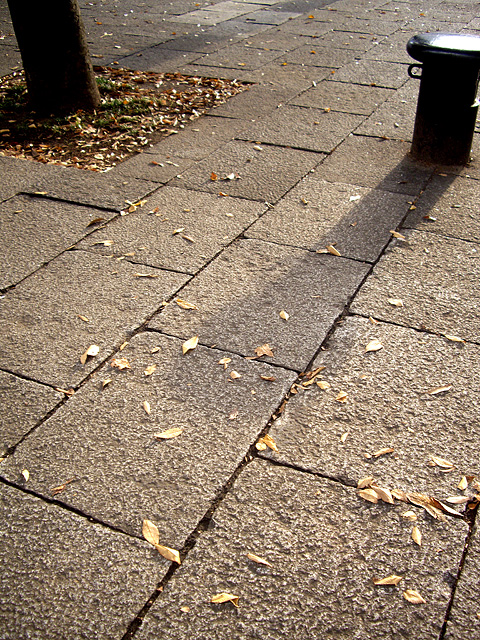 西日と歩道と落ち葉の無料写真素材