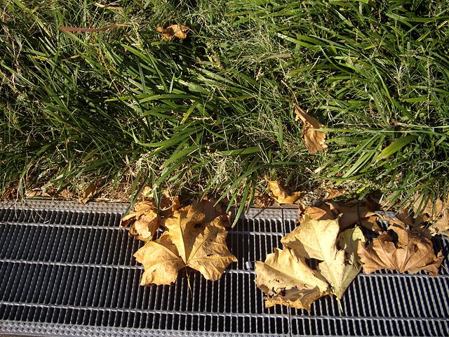 道の脇の枯れ葉