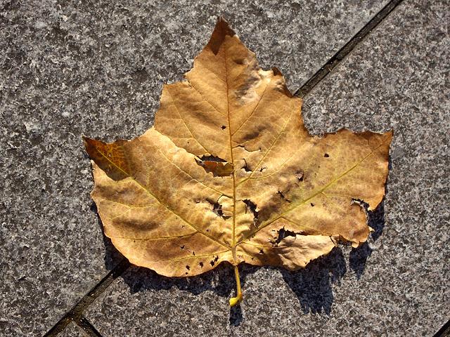 枯れ葉の形の写真素材 フリー