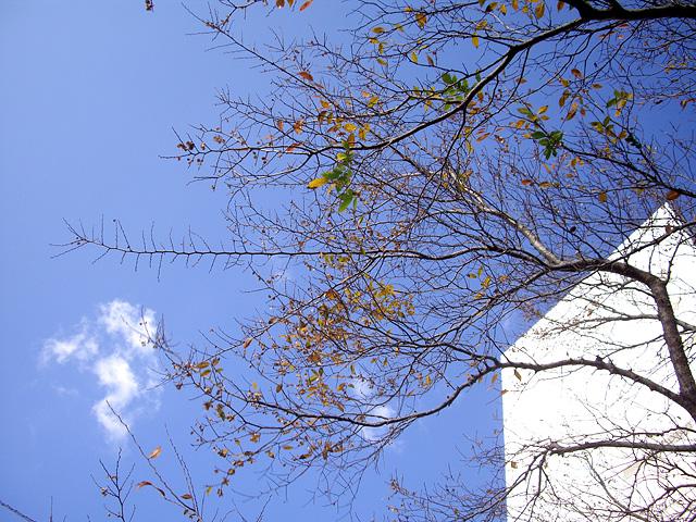 秋の木と空の写真素材 フリー