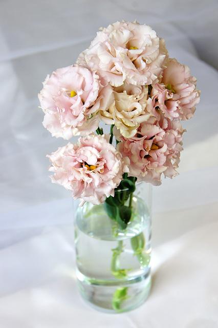 ピンクのトルコキキョウの無料写真素材