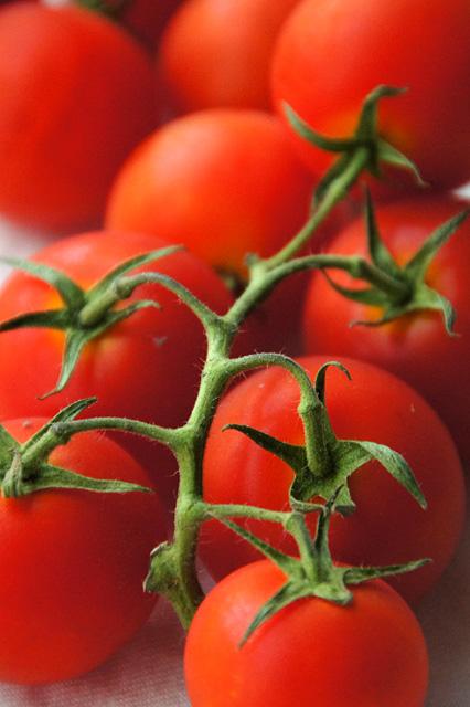 トマトの写真素材 フリー