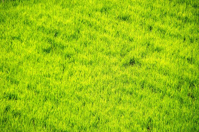 田の写真素材 フリー
