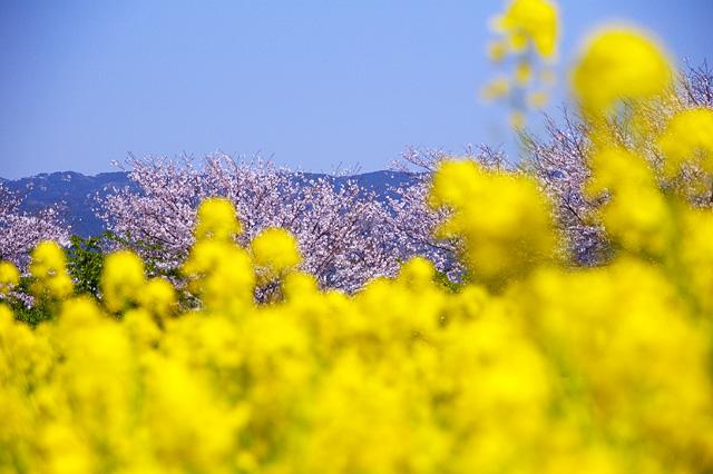 春色の写真素材 フリー