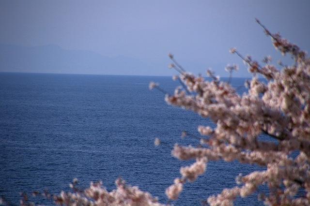 桜と水平線