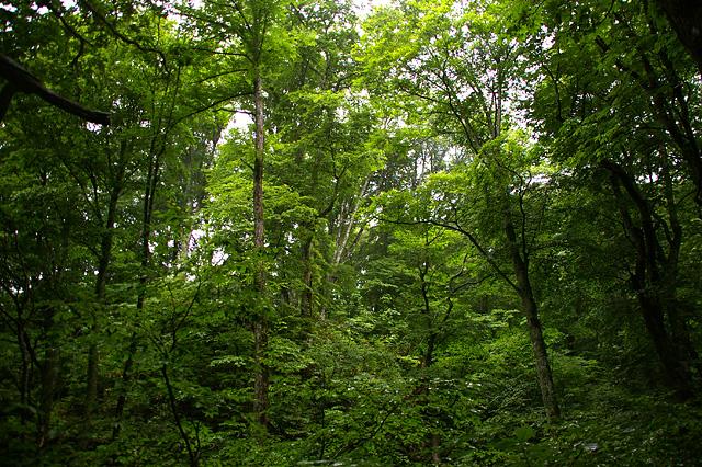 雨の降る森の写真素材 フリー