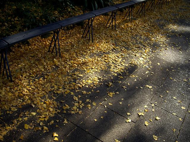 光りと影と落ち葉