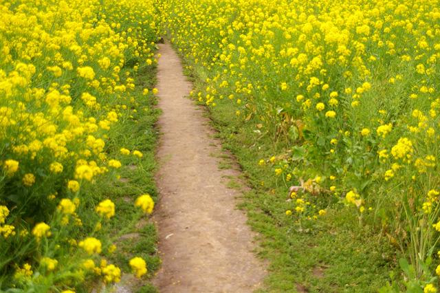早春の写真素材 フリー
