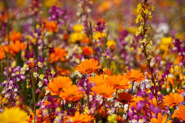 お花畑の写真素材 フリー