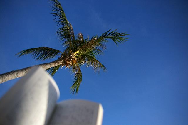 ビーチで読書の写真素材 フリー