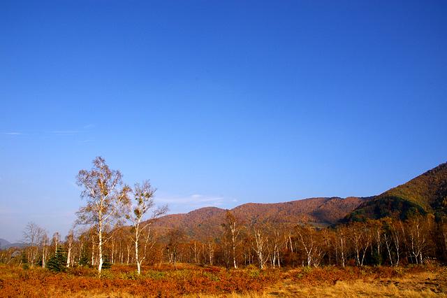 湿原の秋の写真素材 フリー
