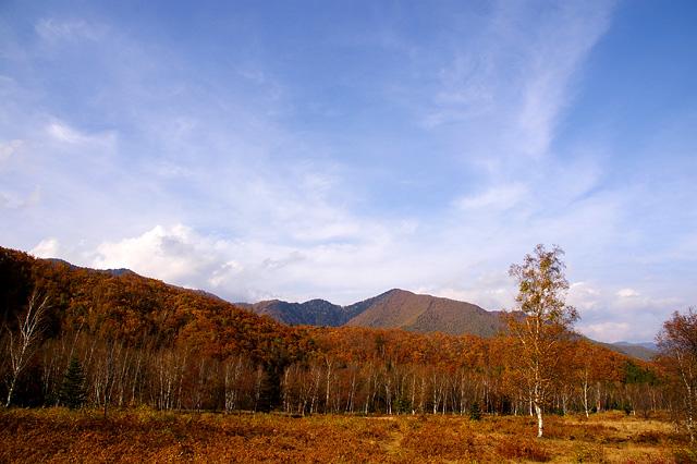 湿原の秋の無料写真素材