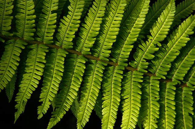 尖がった形の葉の写真素材 フリー