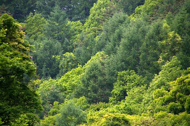 山の斜面の森