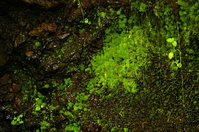 苔の写真素材 フリー