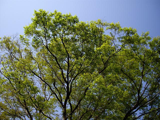 新緑の写真素材 フリー