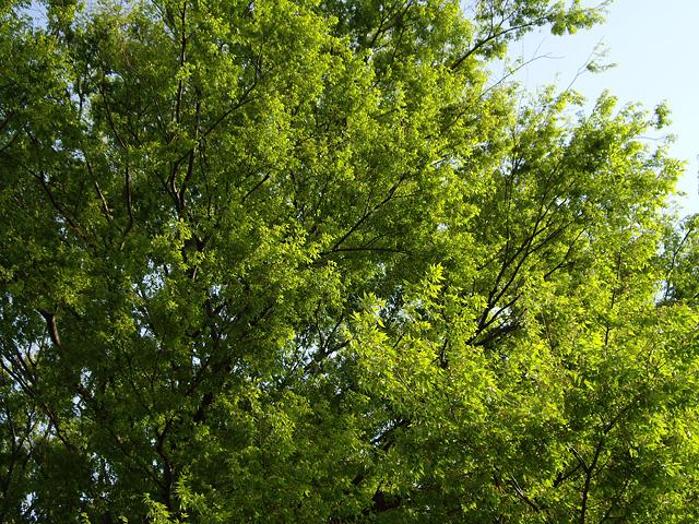 木の枝の写真素材 フリー