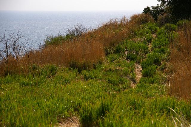 崖の上の道