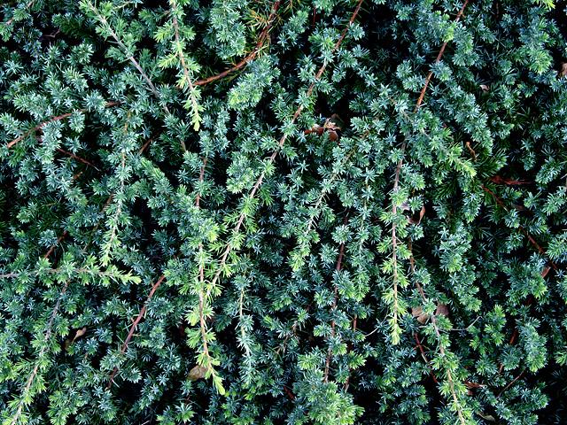 緑の葉っぱのテクスチャ