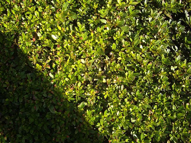 葉っぱのテクスチャー用の写真素材 フリー