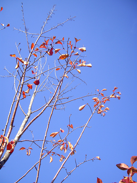 葉っぱが落ちた木の写真素材 フリー