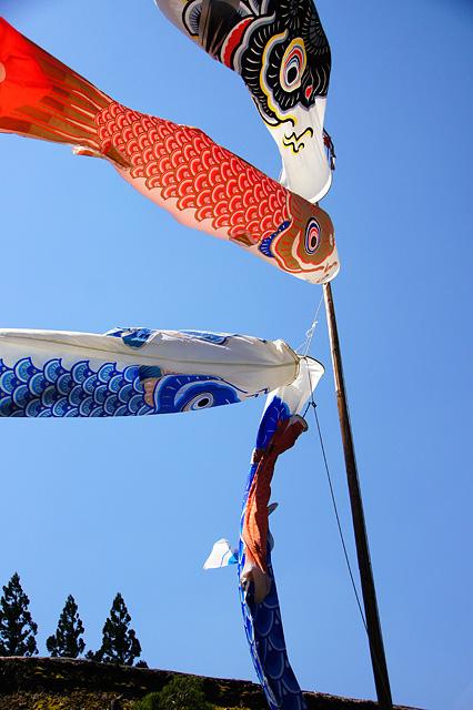 青空と鯉のぼり